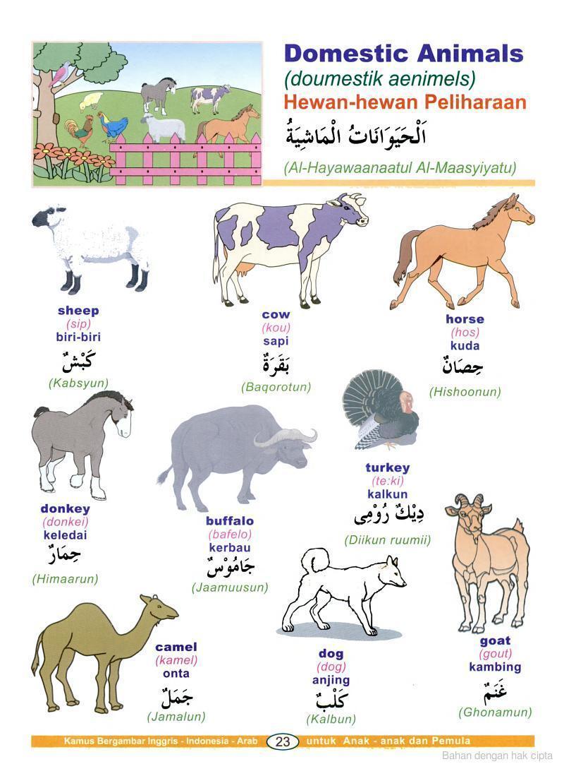 Kamus Bahasa Arab Bergambar   Almachzumi's Blog